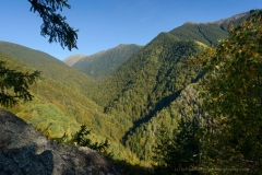SaveParadiseForests - Romania