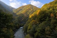SaveParadiseForests- Romania