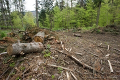 SaveParadiseForests - Romania