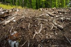 Ancient Forest Destruction - Romania