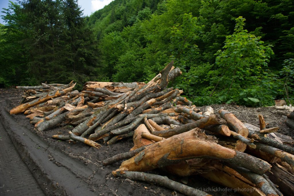Romanian state forestry Romsilva wants to increase logging in Semenic national park