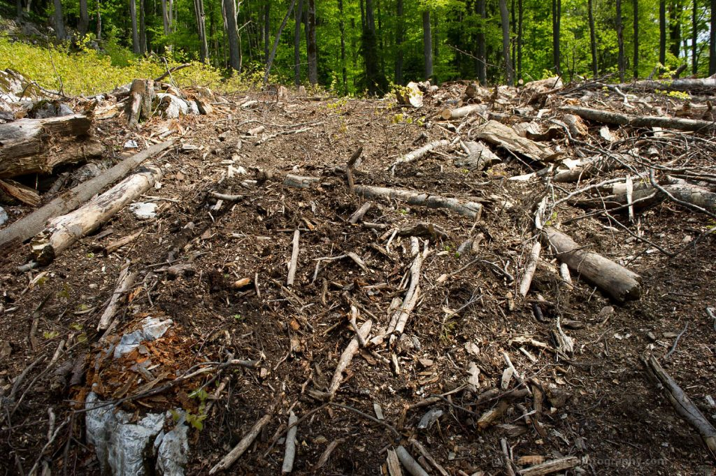Romania: Amnesty for forest crimes?