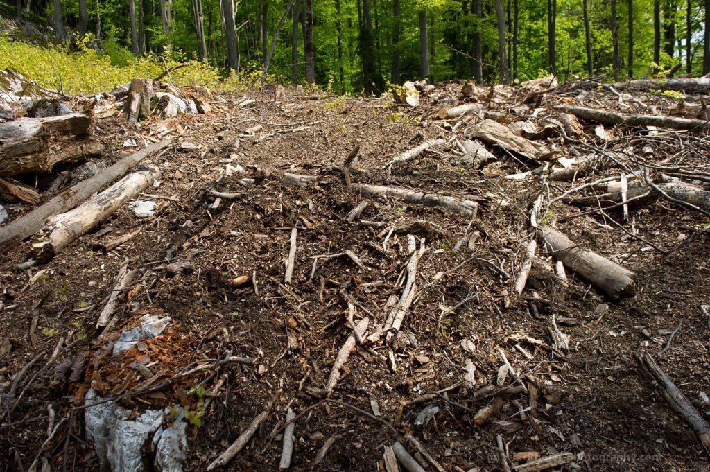 Rumänien: Nun auch noch Anmestie für Waldfrevel?