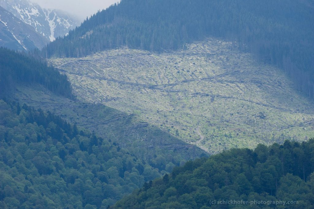 Fagaras Natura 2000 Site, Romania - May 2016: Ancient forest and logging in the southern Carpathians.