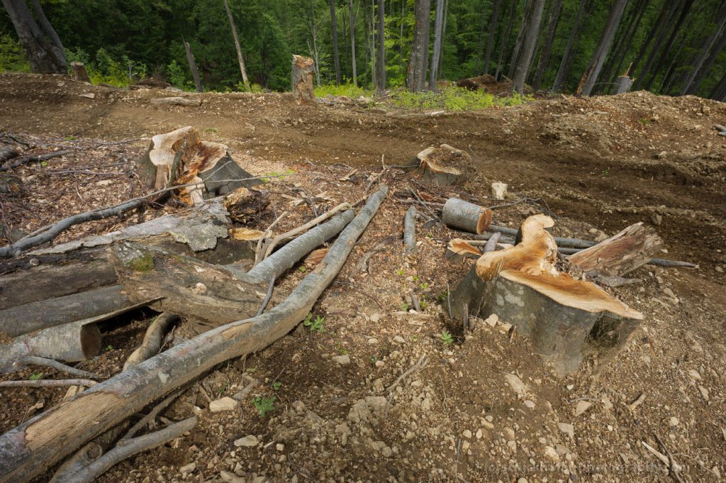 EuroNatur: Forest destruction in Romanian national parks has to stop