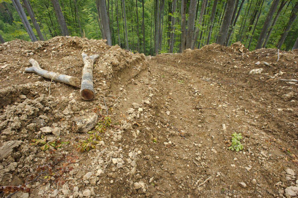 Bialowieza: EuroNatur und Agent Green begrüßen Urteil des Europäischen Gerichtshofs und fordern für Rumäniens Urwälder ebenfalls einen Stopp der Abholzungen