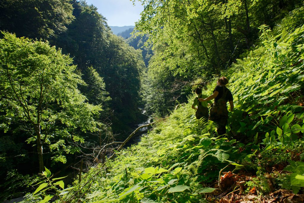 Fagaras Natura 2000 Site, Romania - July 2016: Ancient forest and logging in the southern Carpathians.