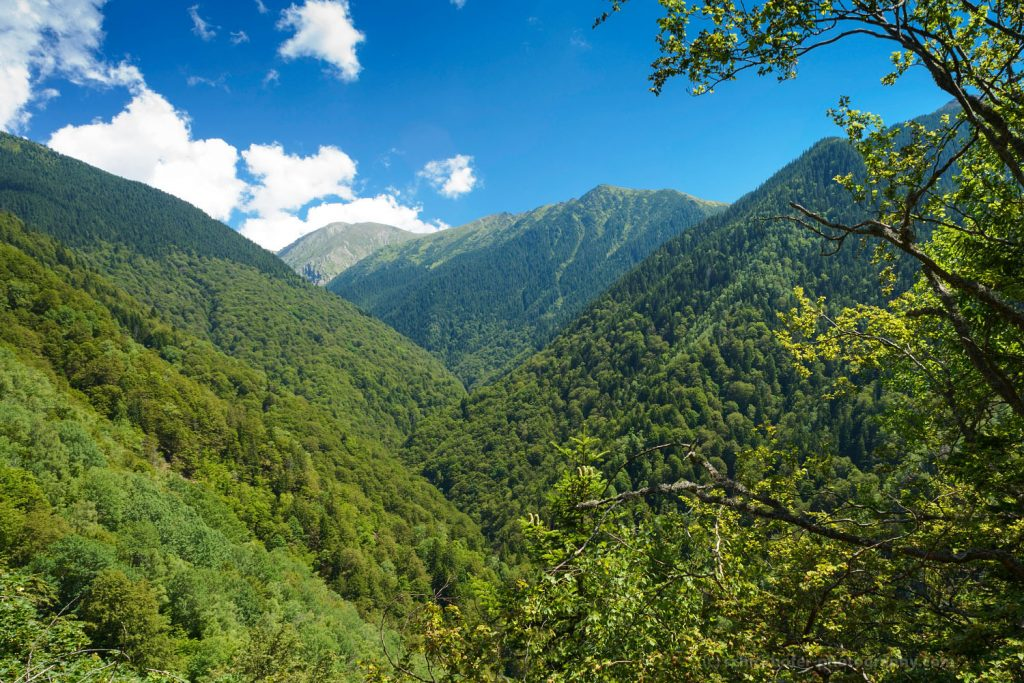 Romania's old-growth forests under immediate threat