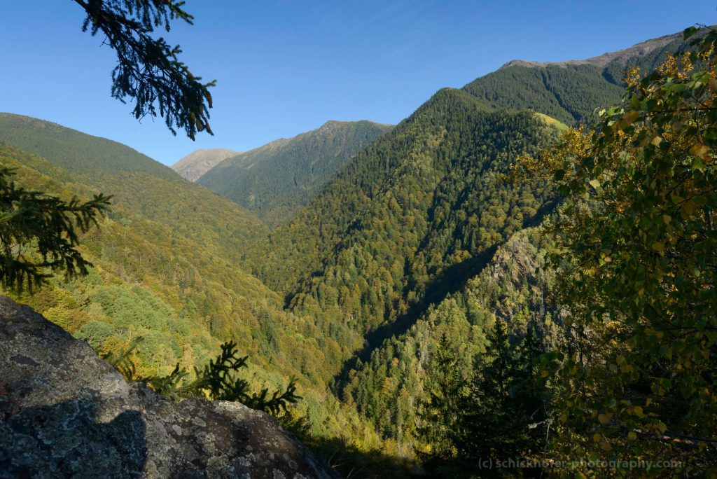 EU Commission urged to protect Europe's largest natural forests in Romania from illegal logging