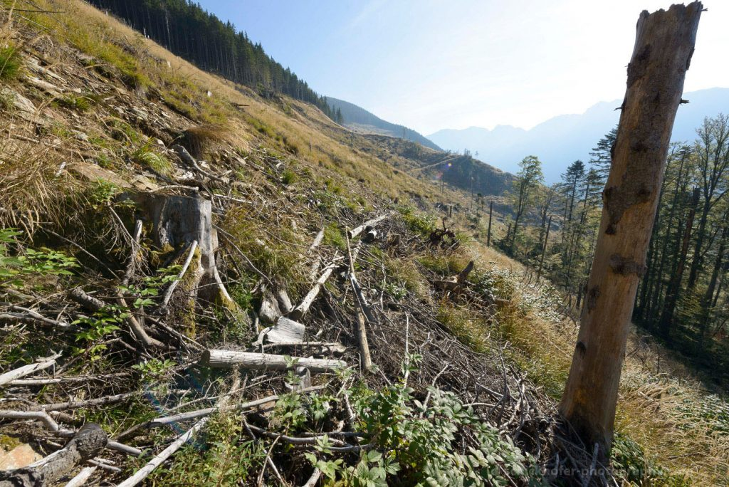 Weak protection of primeval forests in Romania