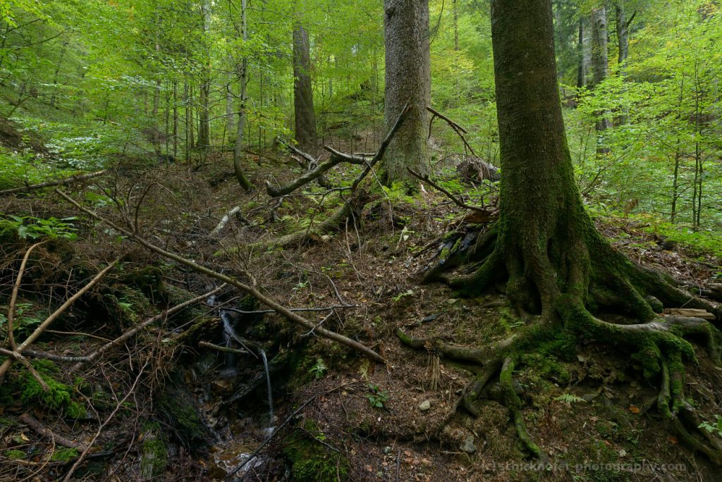 Does World Heritage Status provide protection to Romanian primeval forests?