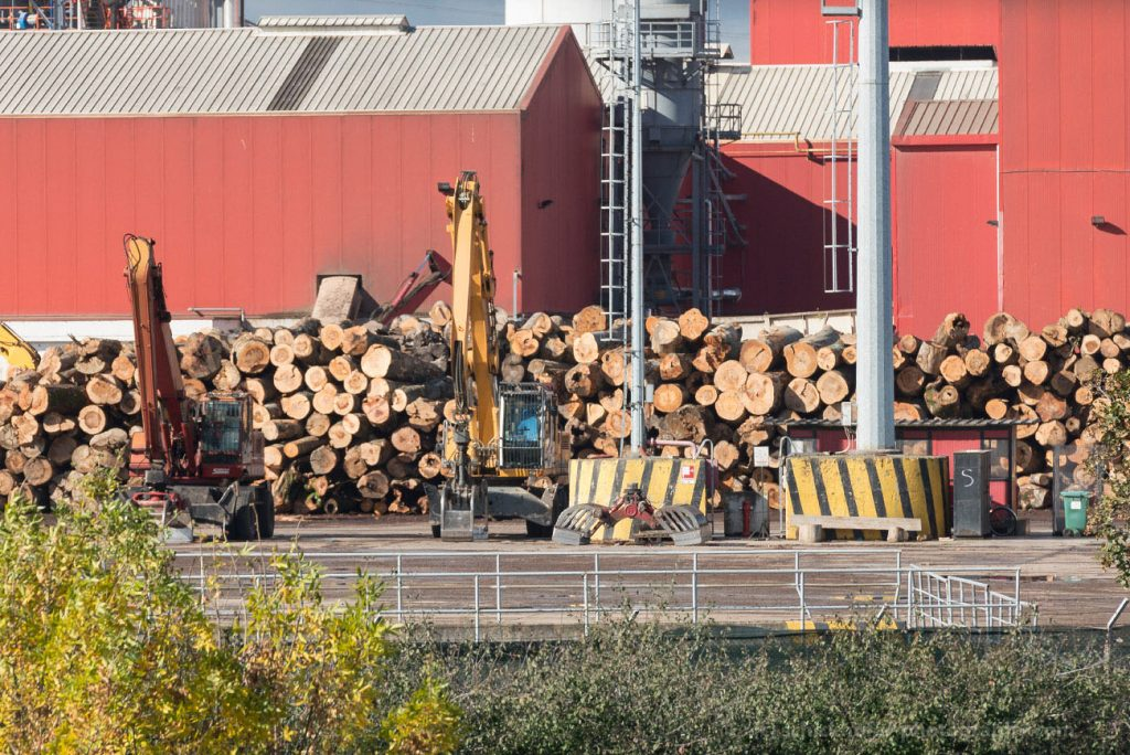 Timber companies dissociate from sourcing wood from Romanian national parks and primeval forests
