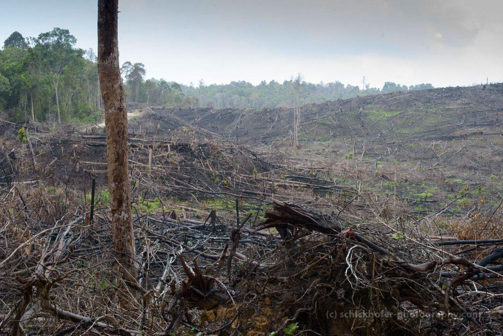 Regenwaldzerstörung; Borneo; Klimaschutz; Urwald
