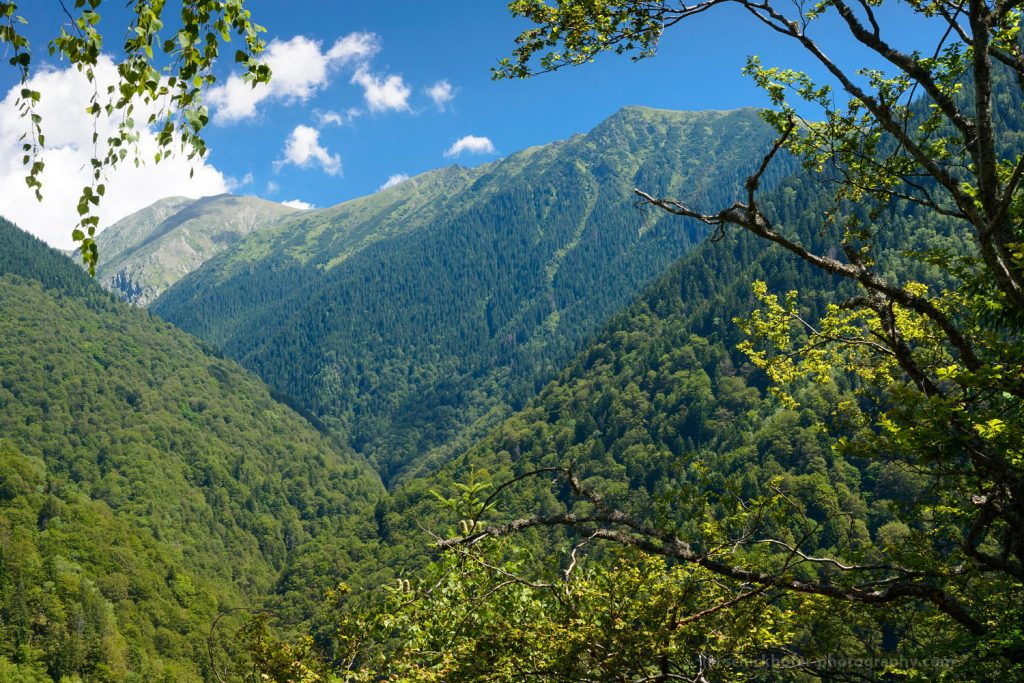Romania: Protection of some primary forests announced – shortly before national elections