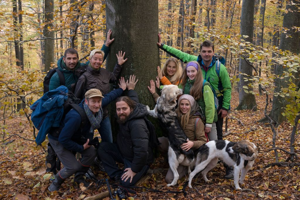 Cosava Mica, Romania - October 2015: Endangered ancient forest in the southern Carpathians.