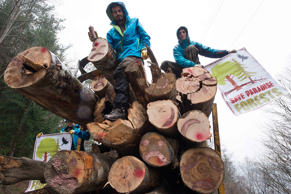 Fagaras Natura 2000 Site, Romania - March 10, 2017: Agent Green and international forest protectors (including scientists and mountaineers) stop logging trucks in Fagaras Mountains Natura 2000 site and call on Romanian Government to take action saving Europe's last large primary forests in Romania.