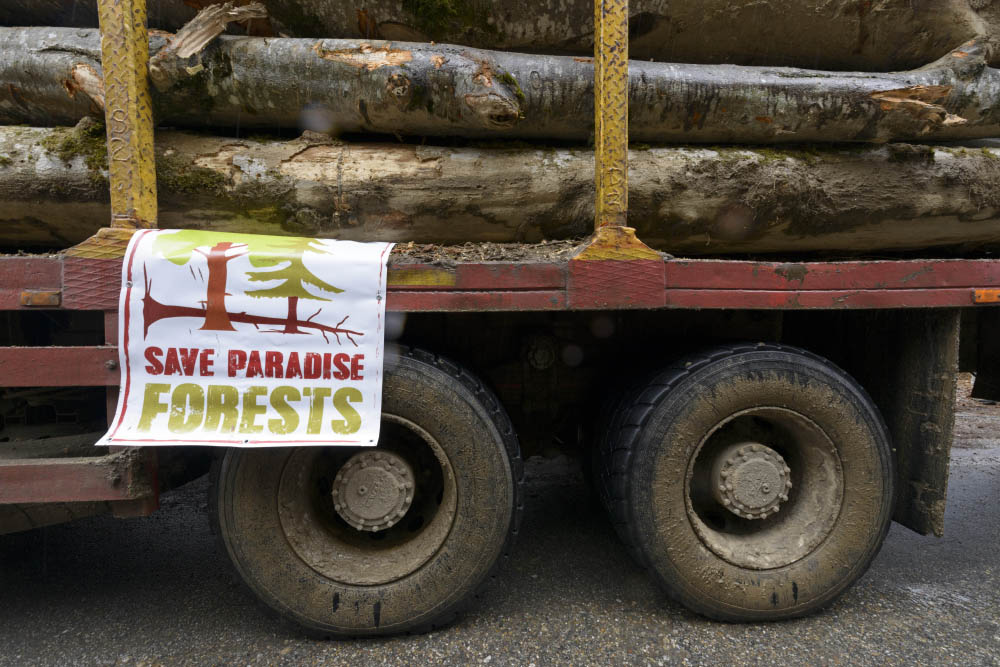 Romanian Parliament: Hurdles for police operations against illegal logging?
