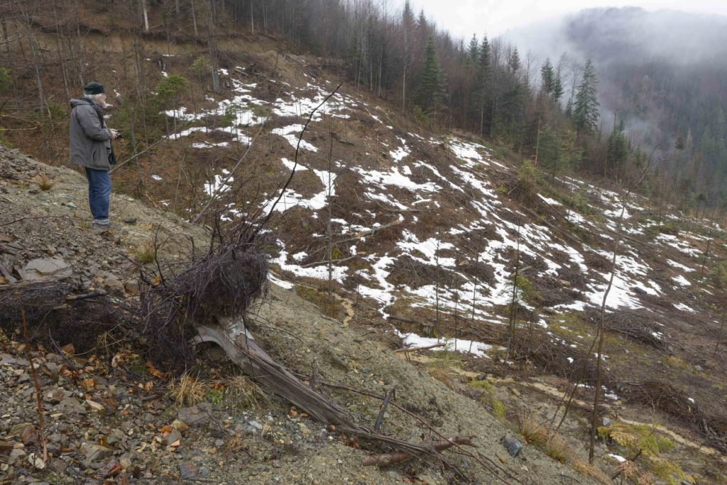Evidence about forest destruction in Vidraru area