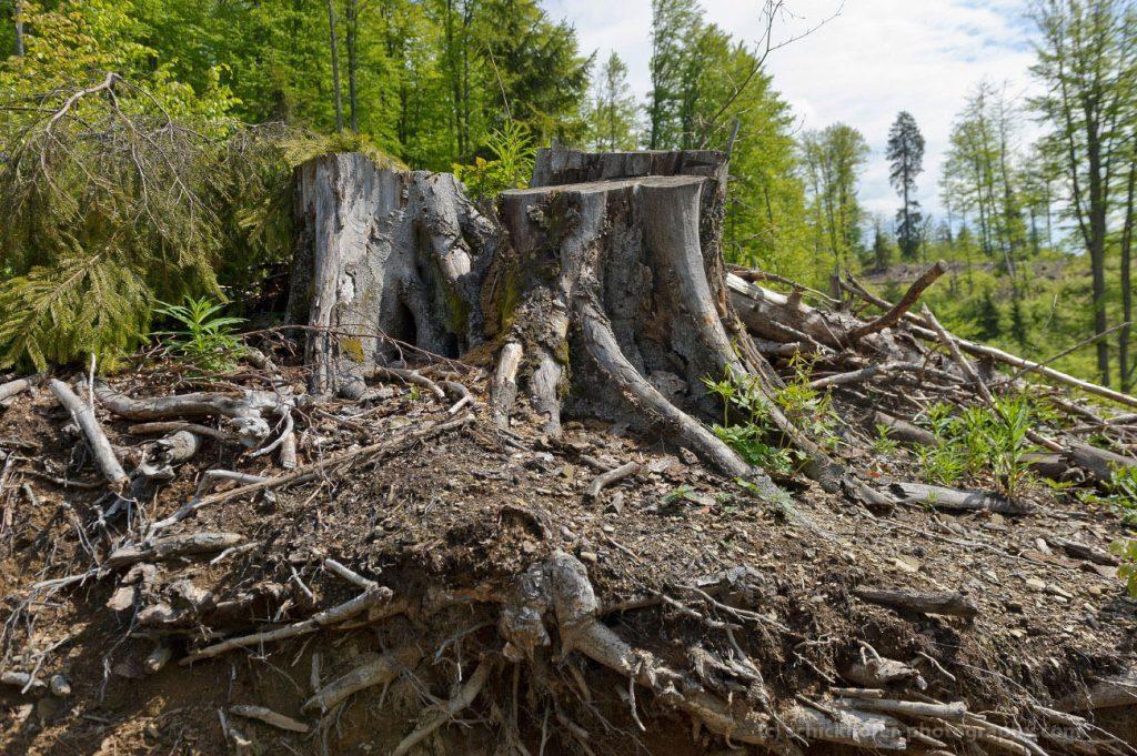 Spiegel TV: Illegale Abholzungen in Rumänien