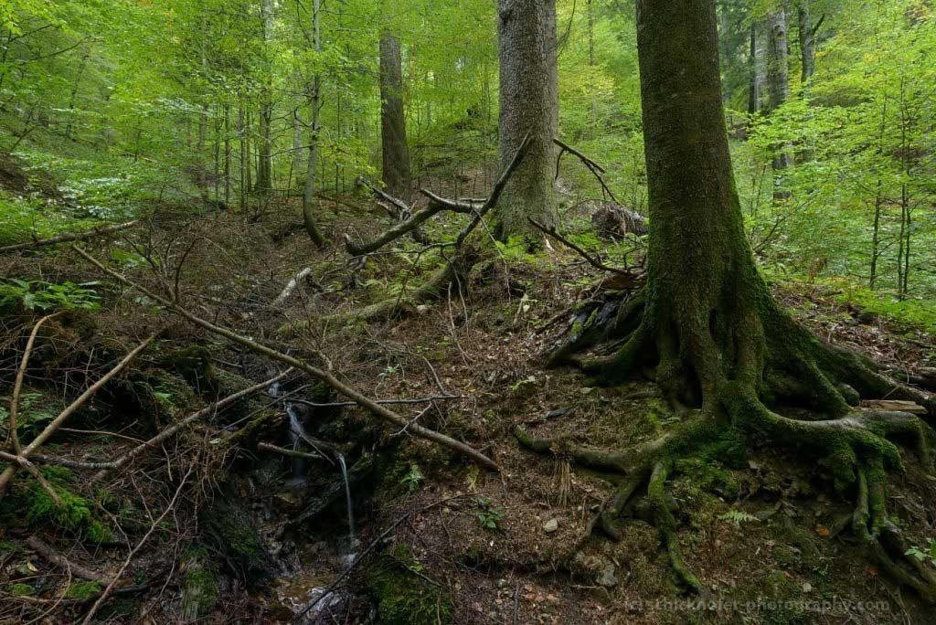 Bietet Welterbe-Status den rumänischen Urwäldern Schutz vor ihrer Zerstörung?