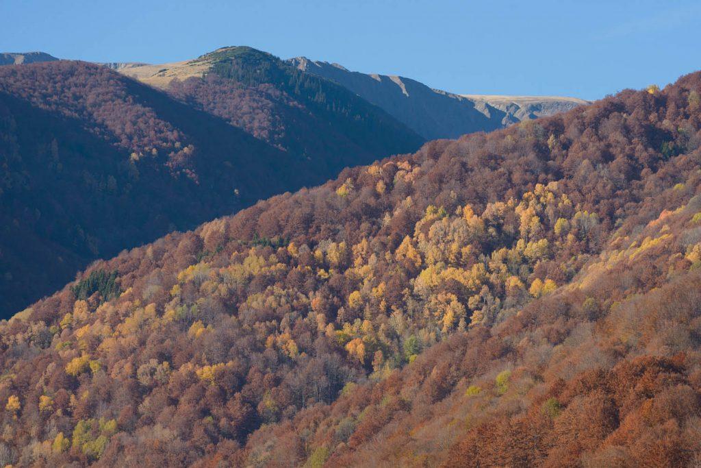 Große ungeschützte Urwälder entdeckt – Domogled und Valcan Gebiet