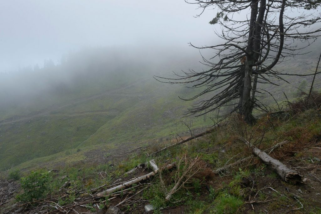 EIA: Illegal Logging in Rodna Mountains National Park