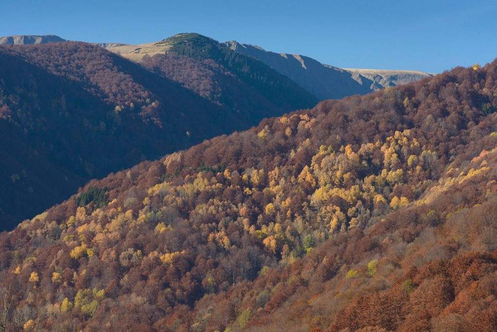 Romania: Deliberate Destruction of State Owned Old Growth Forest in National Parks