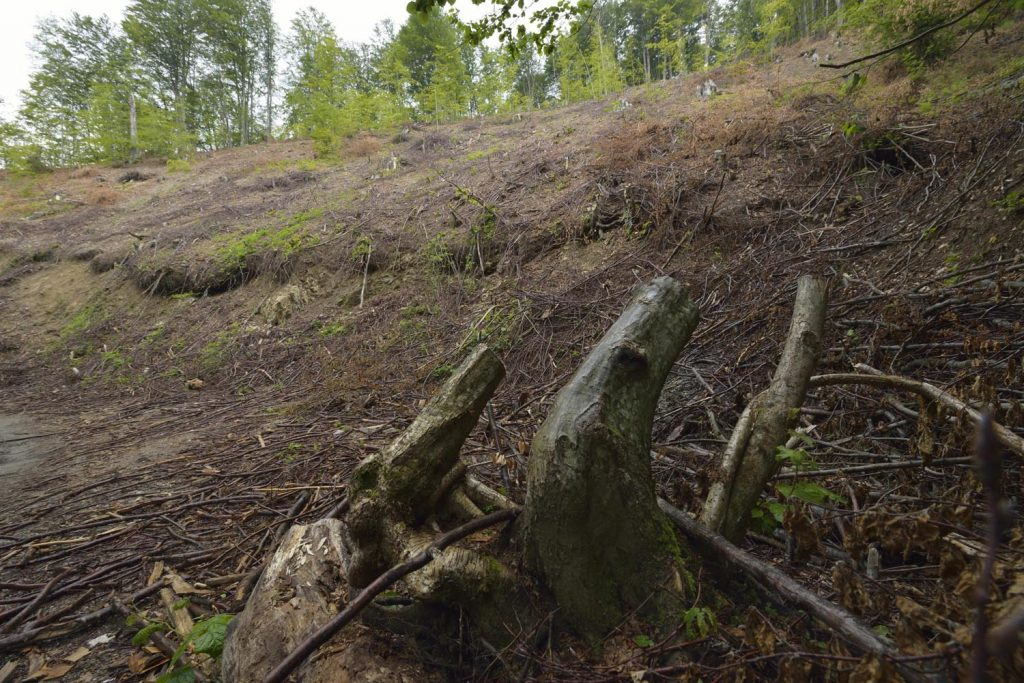 How billion-dollar firms and EU governments are failing Ukraine's forests