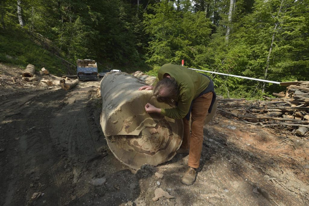 Forest destruction in Romania: Large-scale raid against suspected criminal network started