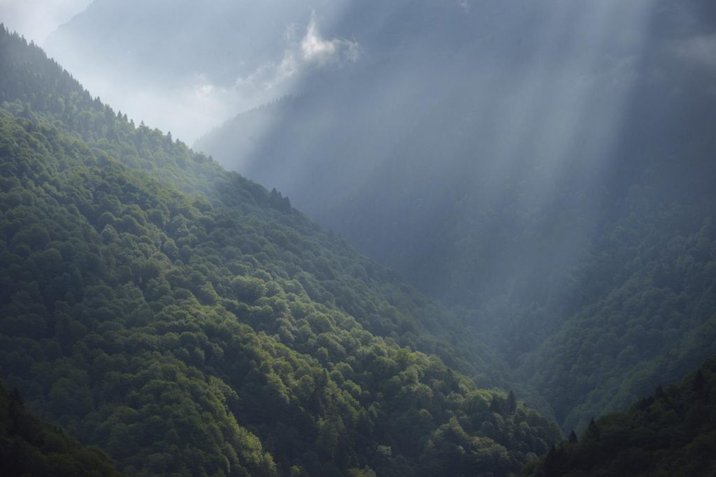 Lush-blog: Why we must protect Romania's primeval forests