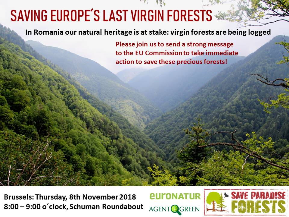 Spotlight on Vanishing Virgin Forests of Romania – Brussels, Nov. 8, 2018