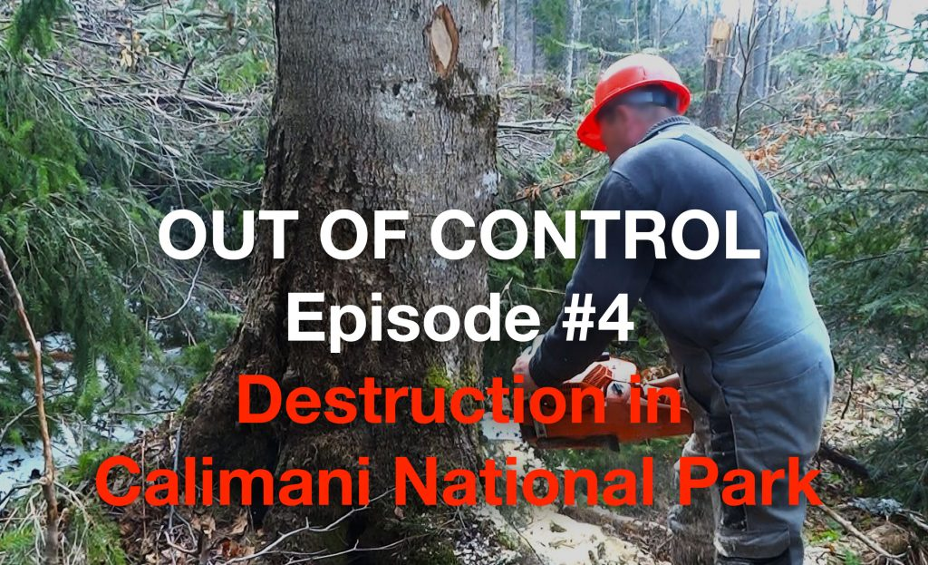 Investigation Video: Romania's State Forestry Enterprise Caught Illegally Logging in National Park
