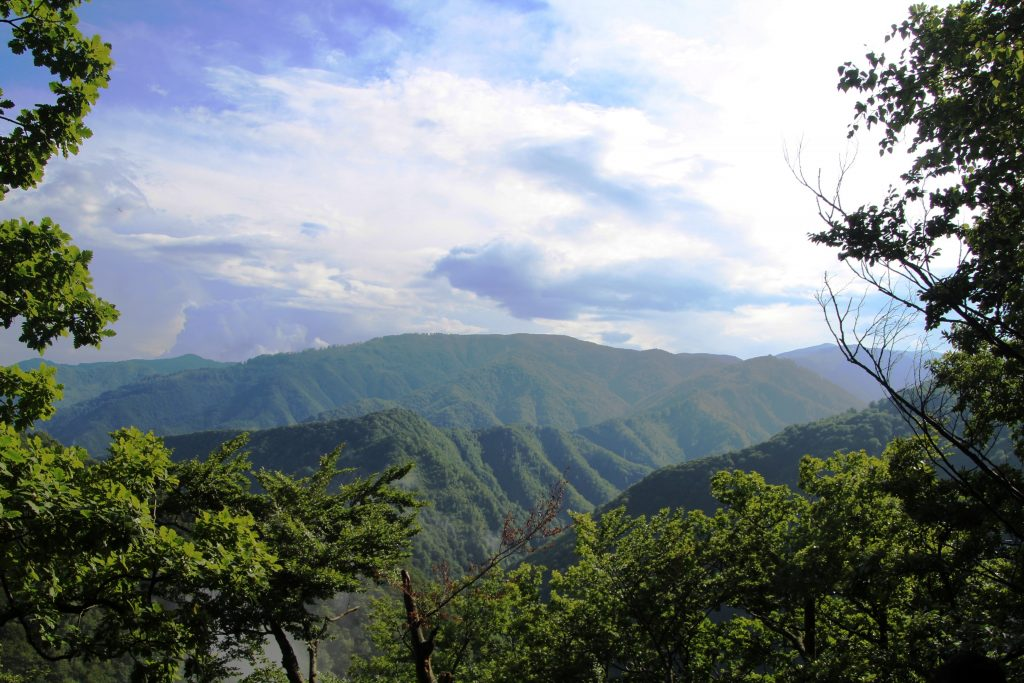 Petition: Rumänien – Rettet Europas letzte große Urwälder!