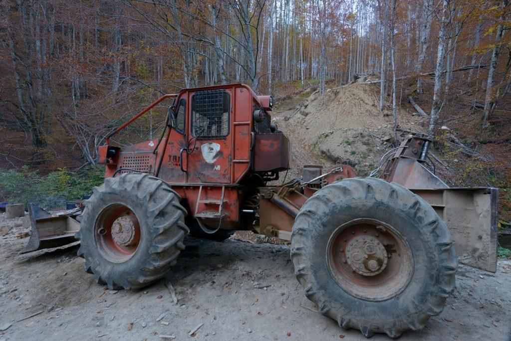Domogled Nationalpark: Teile des Urwaldes von Cernisoara werden für die Abholzung versteigert