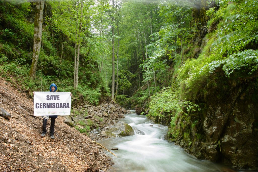 Success: Cernișoara primary forest in Romania's Domogled National Park finally strictly protected
