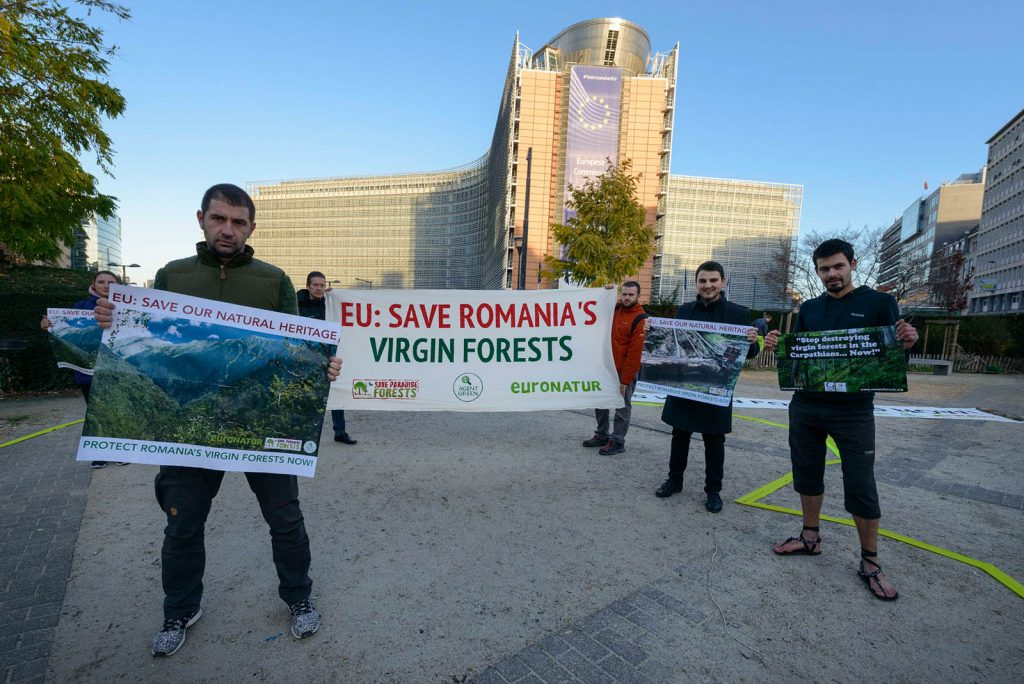 Activists urge EU Commission to save Romania's Virgin Forests
