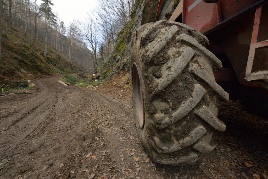Romania: Justice suspends logging permits in natural forest in Domogled – Valea Cernei National Park