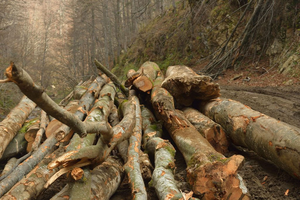 Data kept secret from Romanian forest inventory reveals a catastrophic level of illegal logging