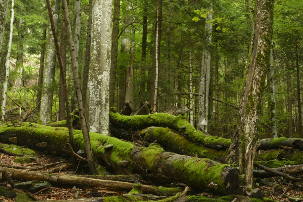 EuroNatur  statement: EU Biodiversity strategy and the European natural forest heritage