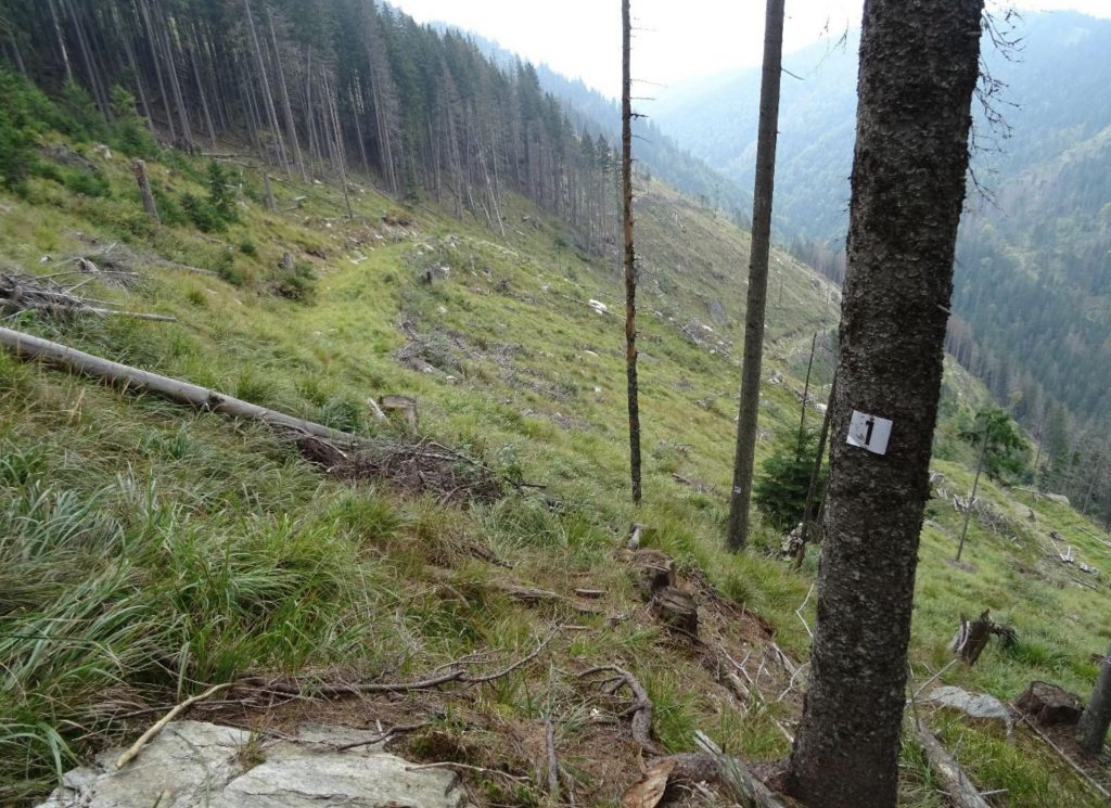 Primary forest research in Romania's Fagaras Mountains compromised by logging