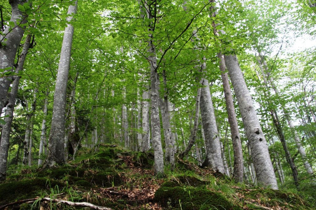 EU-Parliament: Romanian government downplays logging crisis