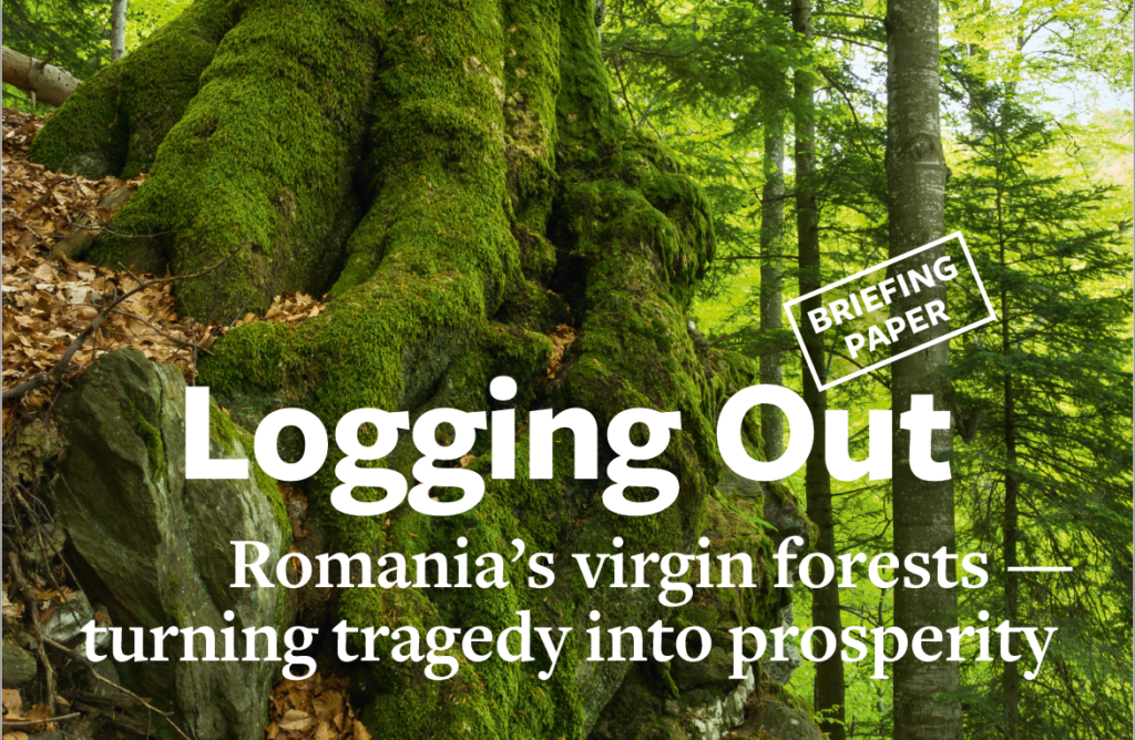 Briefing paper: Romania's virgin forests — turning tragedy into prosperity