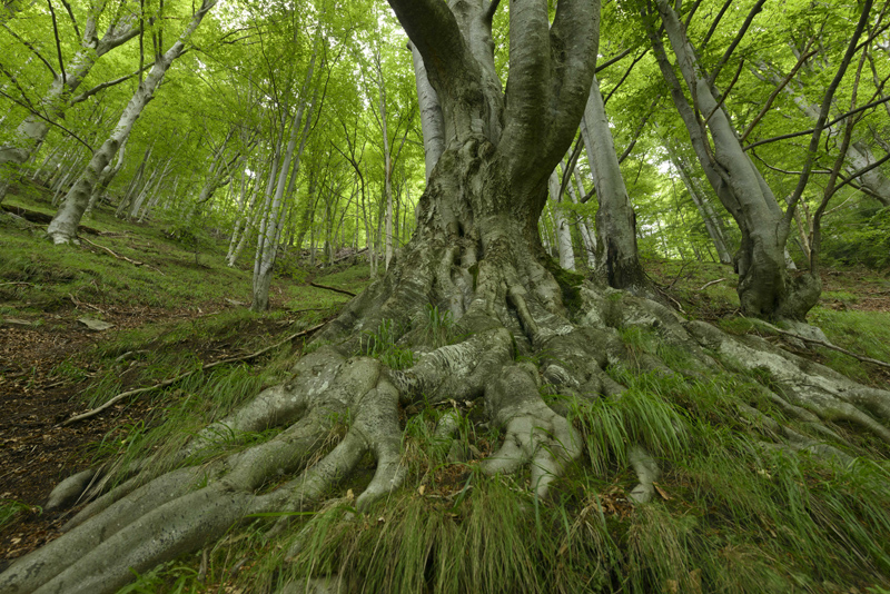 Romania rebuked for insufficiently protecting the World Heritage 'Beech Forests'