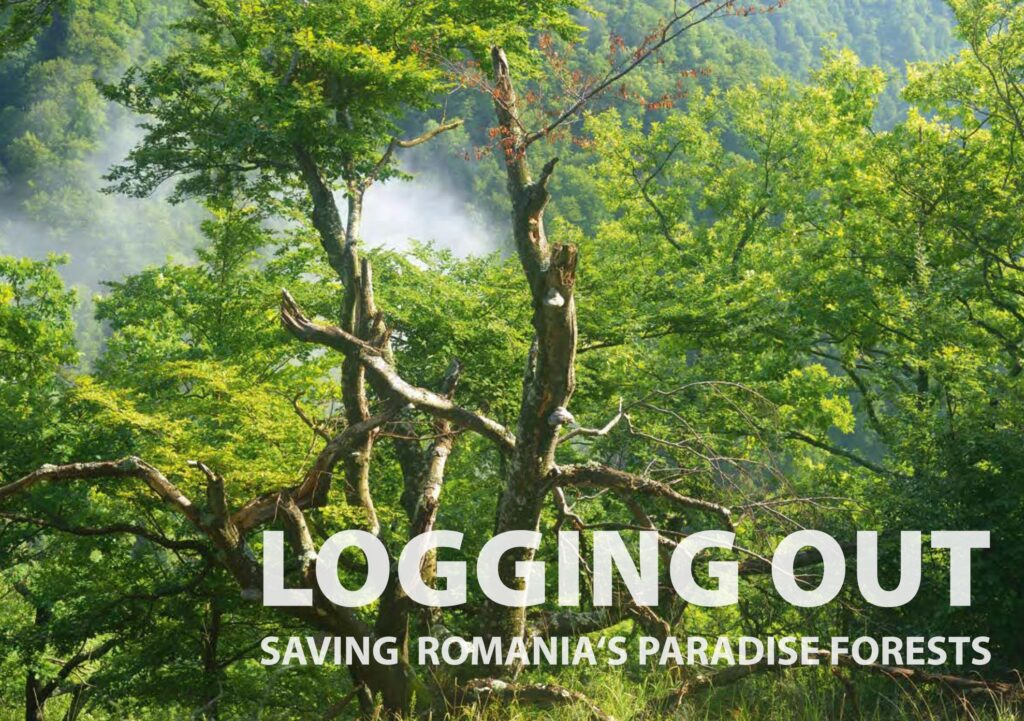 How safe are EU's natural forests? High level event in EU Parliament.