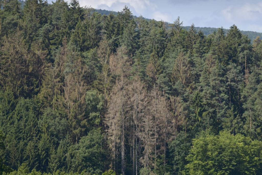 Es braucht eine ökologische Waldwende in Europa
