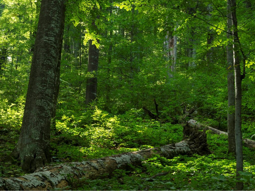 UNESCO and IUCN visit Romania's paradise forests