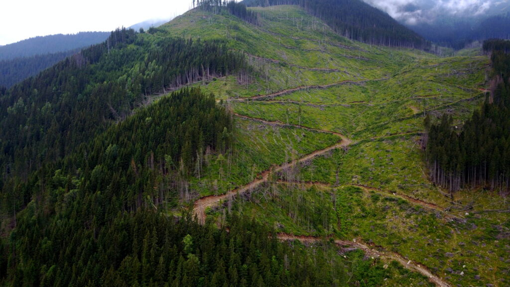 EU announces legal action against Romanian authorities for illegal logging of Europe's last natural forest
