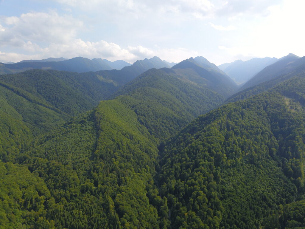 Environmental groups pursue new legal action over destruction of Romania's natural forests