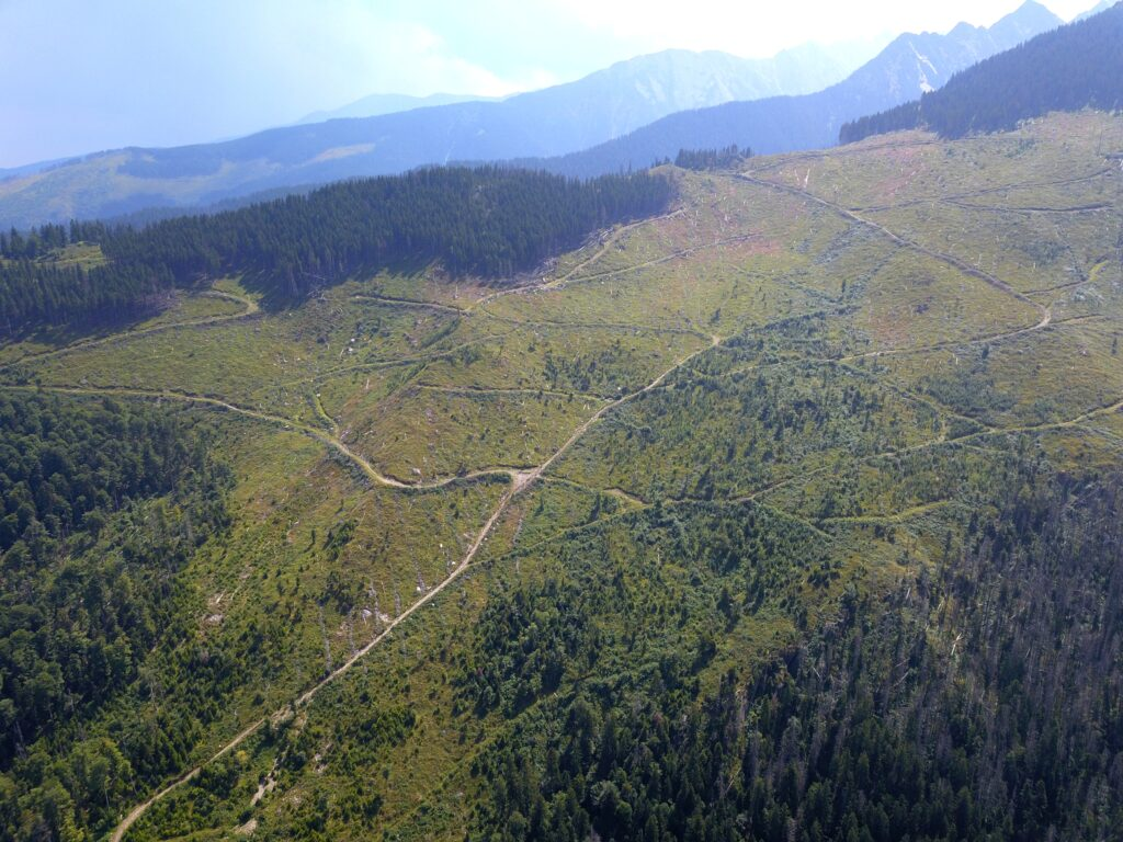 Tackle illegal logging or face court, Commission warns Romanian Government