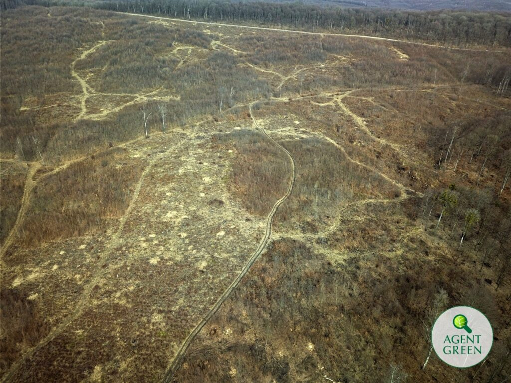 Romania: Massive logging plans threaten Bârnova – Repedea Natura 2000 site